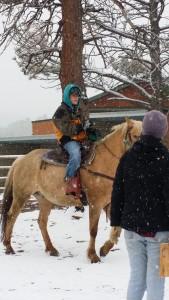 snowy horse 2