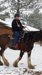 snowy horse 4